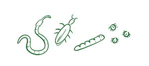 Biodiversité - producteurs fruit légumes au fil des saveurs manosque
