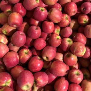 pomme Criss pink - Au fil des saveurs producteurs fruits et légumes