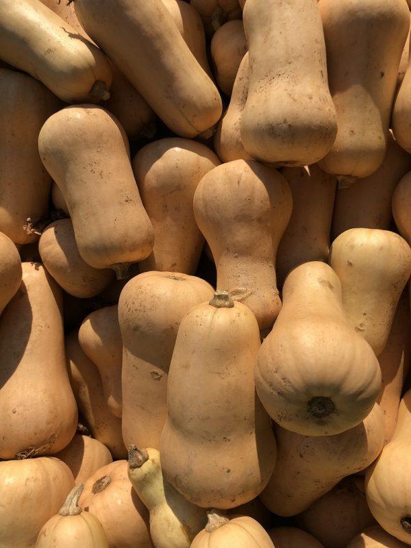 Butternut - Au fil des saveurs producteurs fruits légumes Manosque