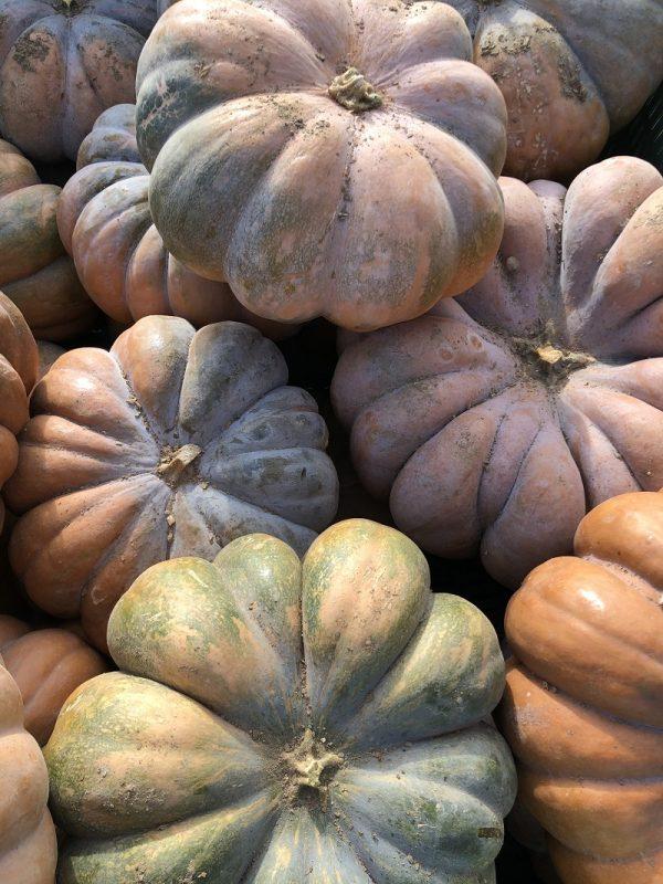 Courge musquée de provence - Au fil des saveurs producteurs fruits légumes Manosque