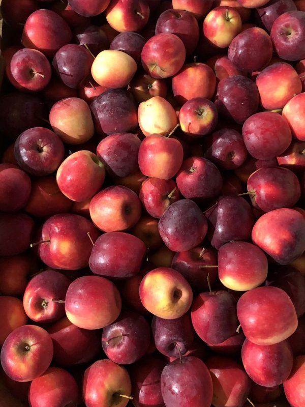 Story - Au fil des saveurs producteurs fruits légumes Manosque